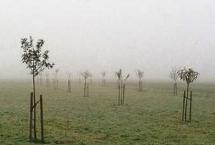 Im milden Winter Bäume pflanzen